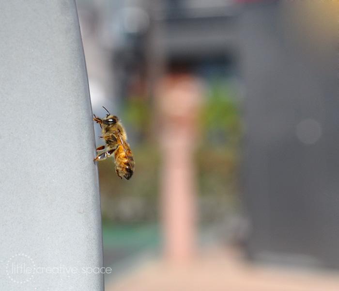 Climbing Bee